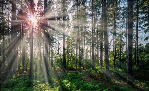 Piscina in legno fuori terra ottagonale allungata Jardin 560: legno di Pino proveniente da foreste selezionate.